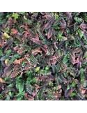 Hardhouten gleufpalen 9 x 9 cm