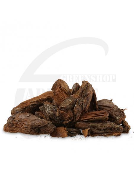 Pinus maritima 40/80