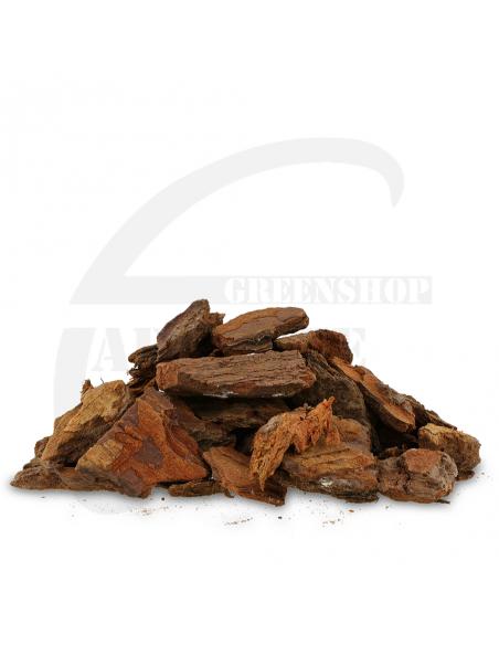 Pinus maritima 20/40