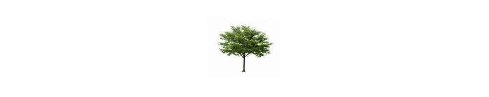 Beplanting, tuinplanten en bomen – supervers, rechtstreeks van de kweker!